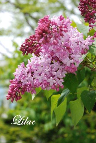 flower14-23.jpg