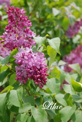 flower14-24.jpg