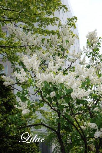 flower14-25.jpg