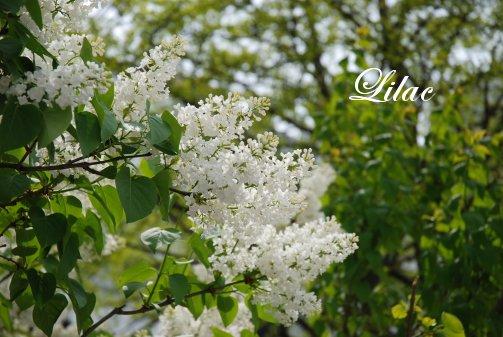 flower14-26.jpg