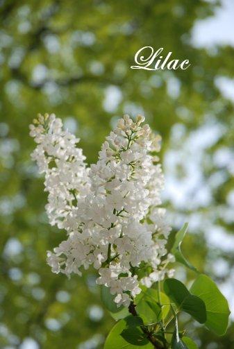 flower14-27.jpg