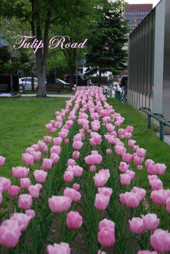 flower14-28.jpg