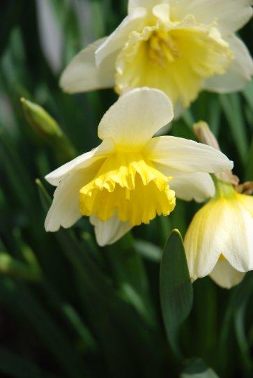 flower14-8.jpg