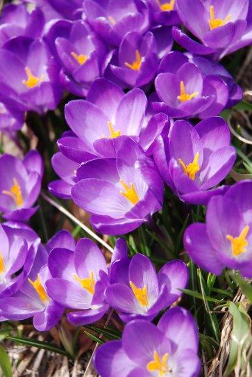 flower14-9.jpg