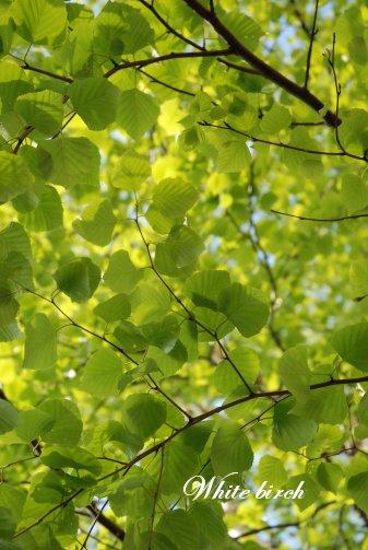 green14-1.jpg