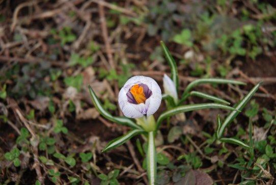 spring14-10.jpg
