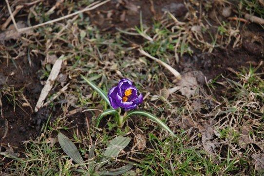 spring14-6.jpg