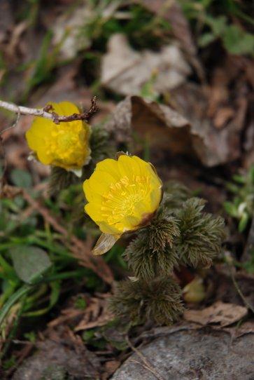 spring14-8.jpg