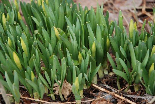 spring14-9.jpg