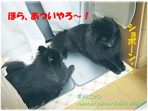 P1140272_20120706215101.jpg