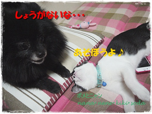 P1150035_20120728210302.jpg