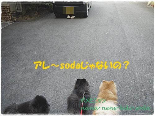 P1190445_20121013194355.jpg