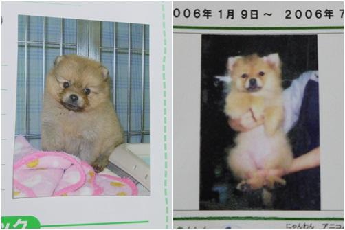 nana_20120922183351.jpg