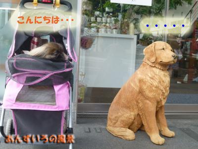 P2 DOG&CAT