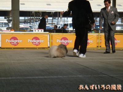 FCI九州インターナショナルドッグショー