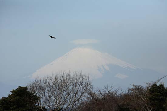 三浦から富士