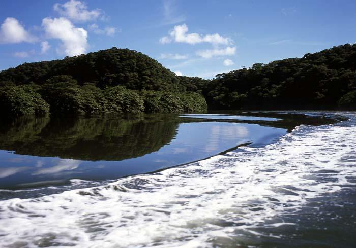 西表川登り1