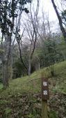 桜の園の桜坂