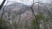 山桜は登って見ると絶景でした♪