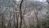 登って見よう山桜