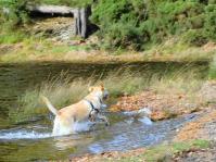 dogrunningwater