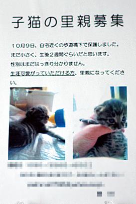 2010-10-10-1.jpg