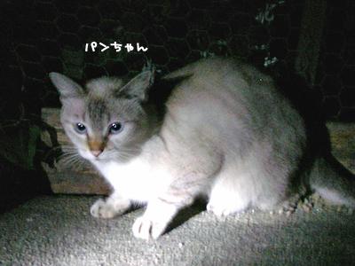 2010-11-12-6.jpg