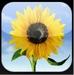 iPhone_Picture_app
