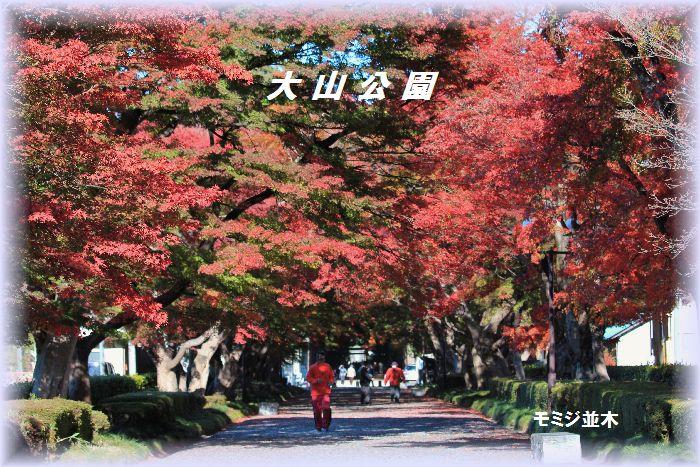 大山公園のモミジ並木