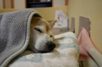 やっとお昼寝