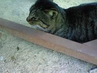 SAの猫1