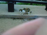 SAの猫2
