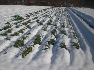 20131111 大雪被害