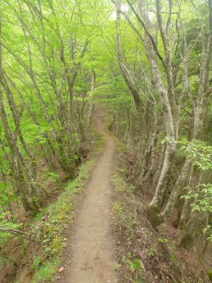 新緑の小道(3)