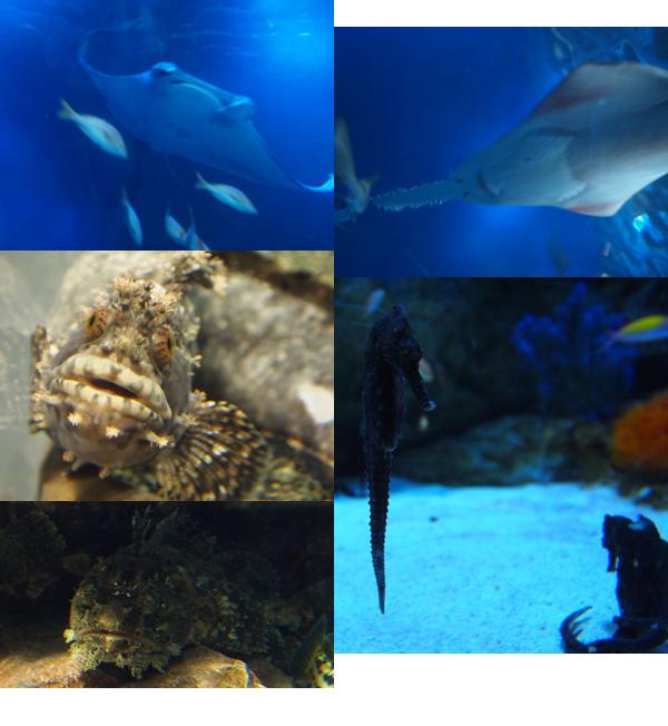 品川エプソン水族館