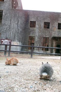ここにもウサギ