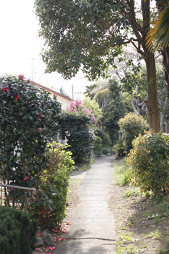 住宅の小道