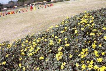 園内はお花いっぱい