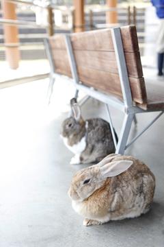 ウサギもいるが触れない