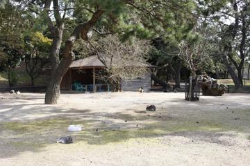 ウサギの村