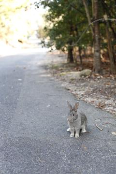 ひよっこりウサギ