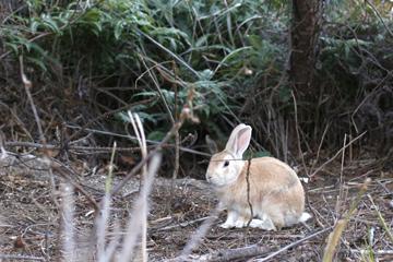 ひとみしりウサギ