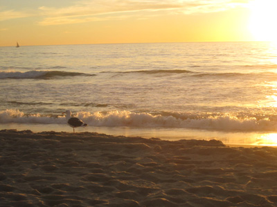 la_beach4.jpg