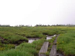 広い湿原 クリックで拡大