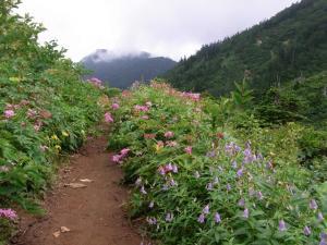 登山道の花 クリックで拡大