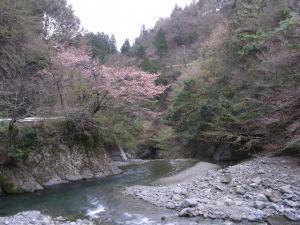 春の渓流 クリックで拡大