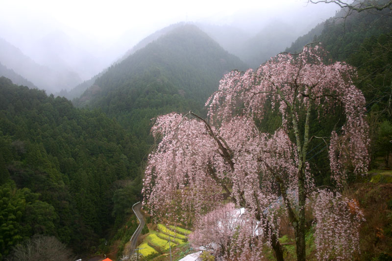 山間 華やかに  (徳島県 名西郡 神山町)