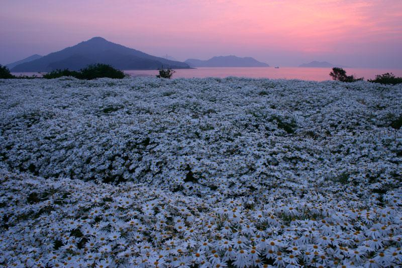 夜明けの花園 (香川県 三豊市 詫間町)