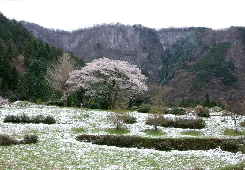 寒さ戻り (香川県 仲多度郡 まんのう町)