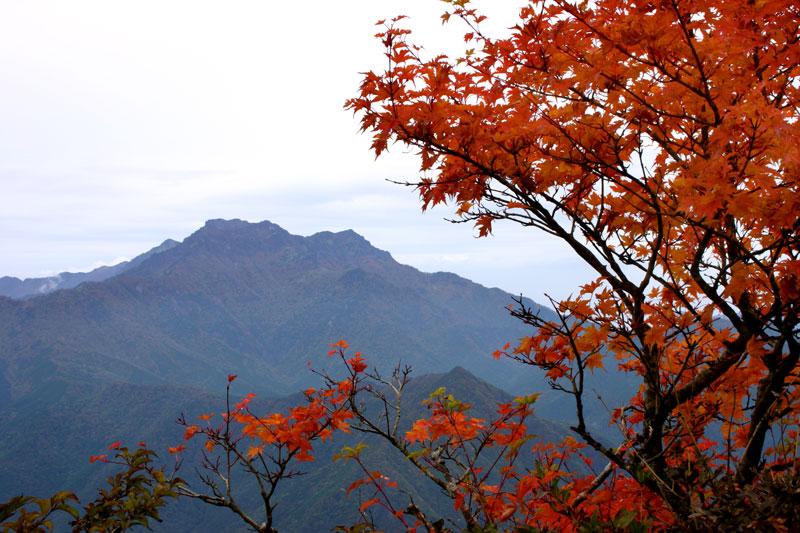 紅葉の彼方に2 (愛媛県 西条市 石鎚山)